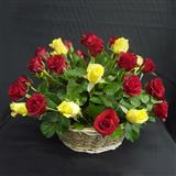 Stunning Arrangement of Roses