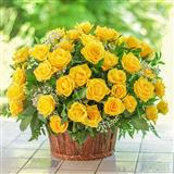 Charming Yellow Roses