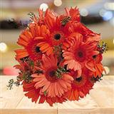 Vibrant Gerberas