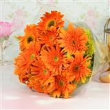 12 Orange Gerbera Bunch