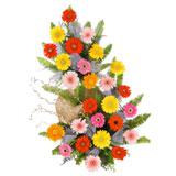 25 Multicolour Gerberas