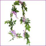 Purple Wisteria Creeper - 6 ft