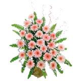 25 Peach Gerbera Basket (Midnight)