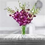 Purple Orchid in a Vase (Midnight)