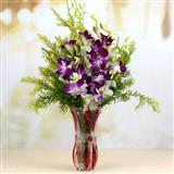 Send Assorted Exclusive Orchids Exclusive Flowers to Bhavnagar