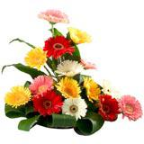 Gorgeous Gerberas Arrangement